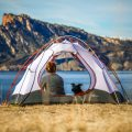 Chien au camping